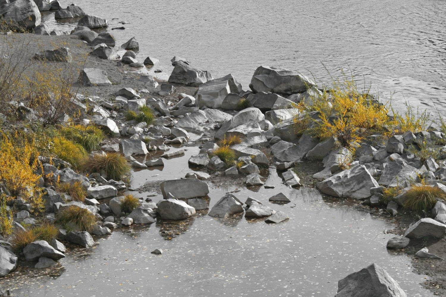The shore of the a river near Mount Hood with spot color Image