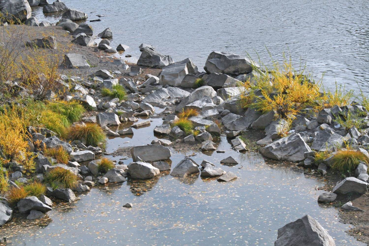 The shore of the a river near Mount Hood Image