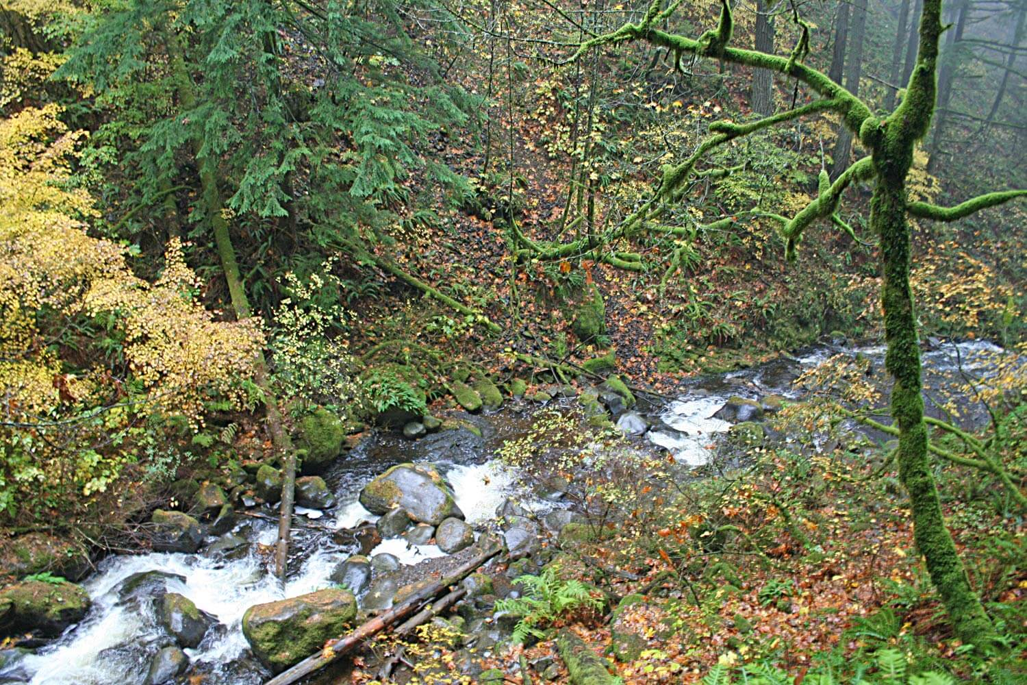 Hidden stream in the Mount Hood National Forest Image