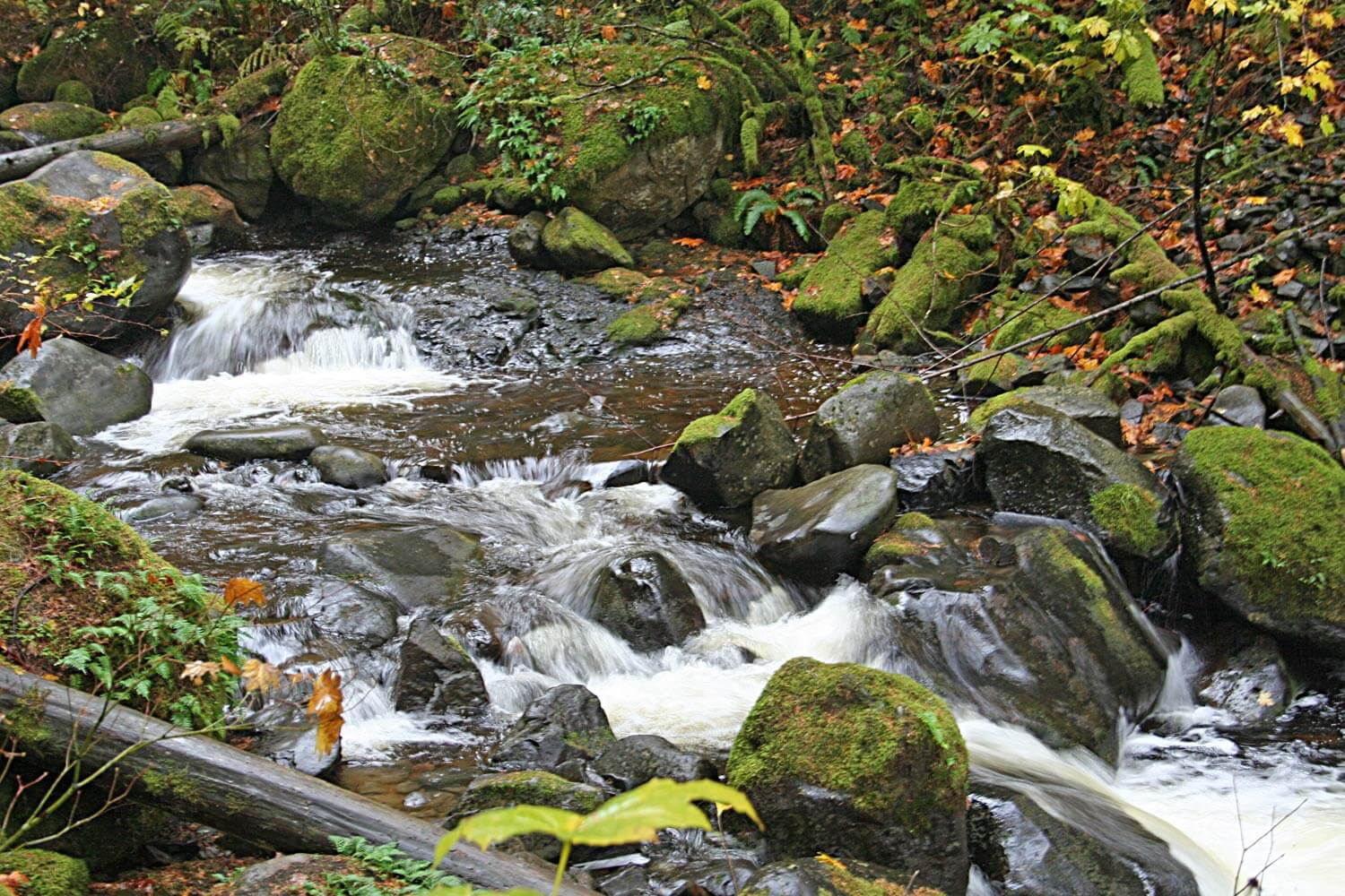 Close up of mossy forest stream Image